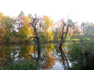 Möwensee im Herbst