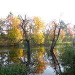 Der Möwensee am Nordostrand des Volksparks Rehberge an der Afrikanischen Straße