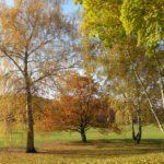Baumgruppe im Südteil des Parks