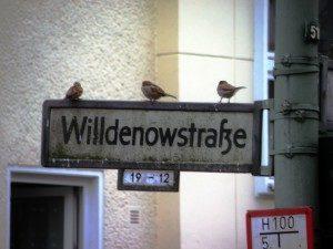 Willdenowstr Straßennamen