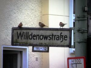 Willdenowstr