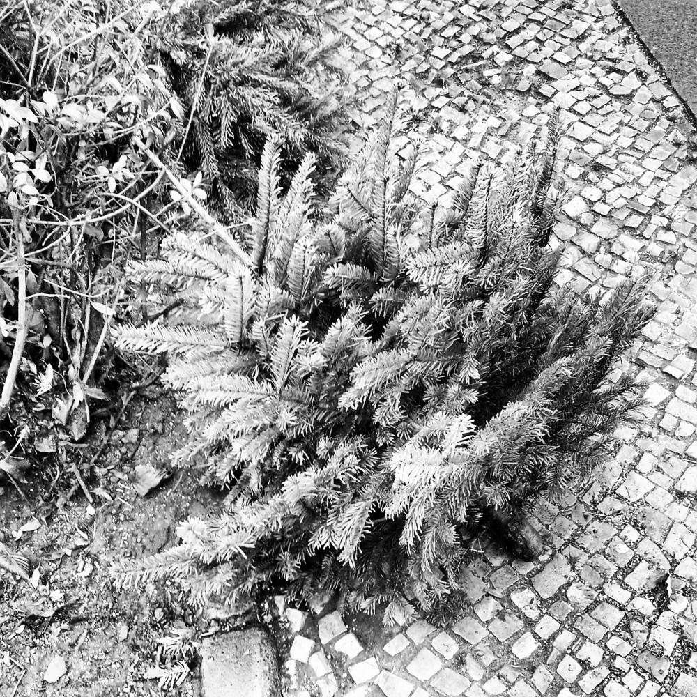 Nach Neujahr liegen Tannenbäume auf dem Bürgersteig