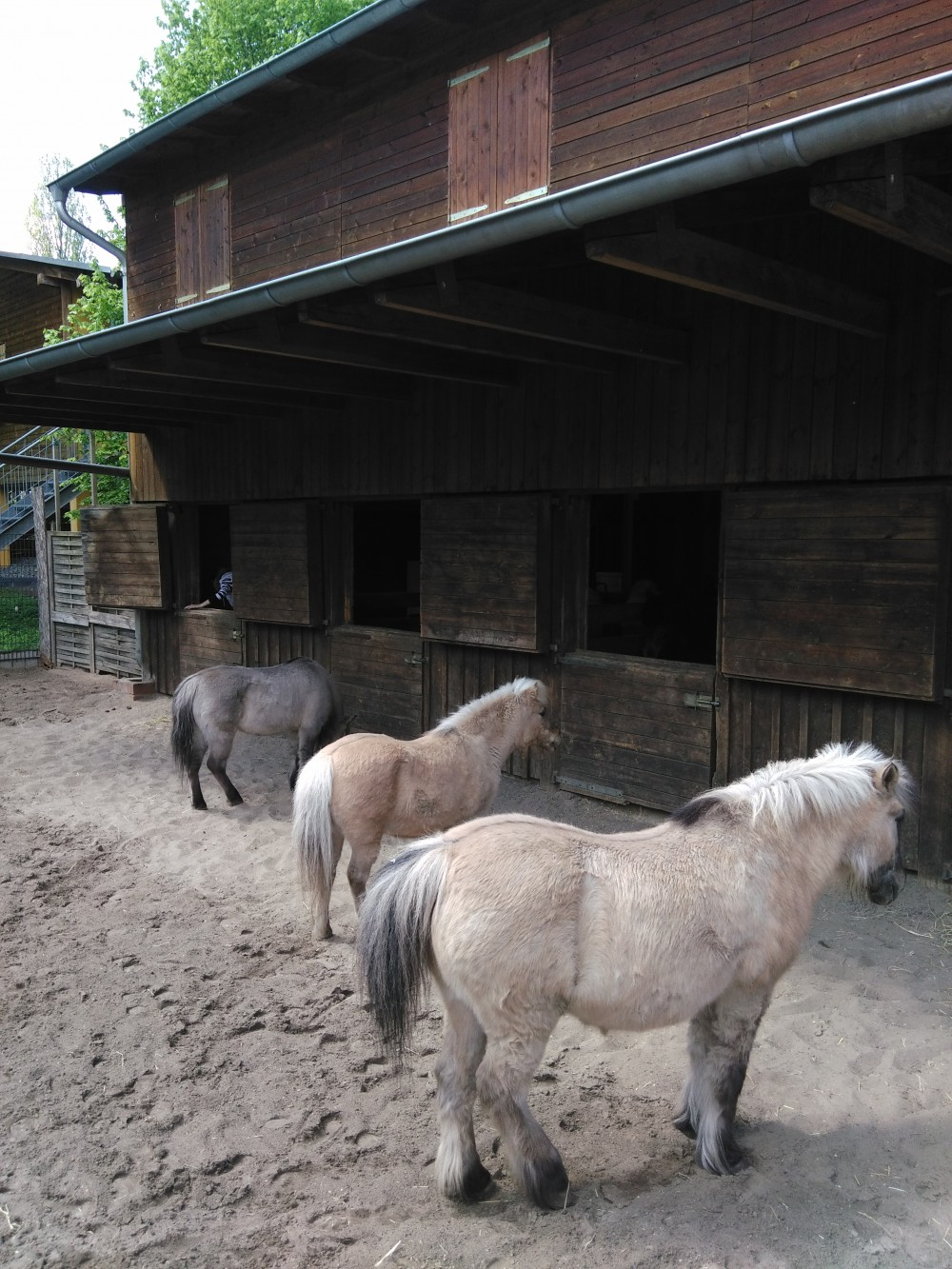 Kinderfarm Ponyhof