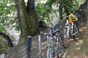 Wildbaden: Räder in der Uferböschung, Zaun ist kein Hindernis - Foto: Andrei Schnell