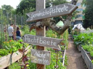 Weddinger Stadtnatur: Der Gemeinschaftsgarten Himmelbeet. Foto: Hensel