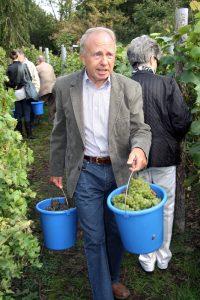 Horst Riewendt bei der Weinlese. Er hat den Weinberg im Humbolthain als Revierleiter anlegen lassen. Foto: Hensel