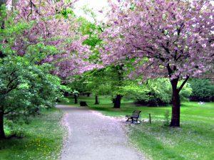 Parks im Wedding: Frühling im Humboldthain. Foto: Hensel