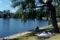 Park am Nordhafen Liegewiese