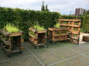 IGA Garten Ideen für mobile Hochbeete