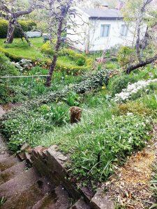 Ein Hanggarten in der Kolonie Panke. Foto: Christine Nitzsche