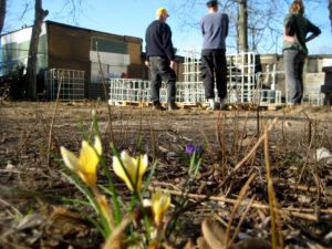 Erste Blüten im Gemeinschaftsgarten Wilde 17 in der Böttgerstraße. Foto: Hensel