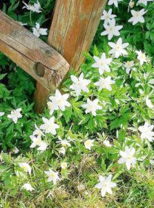 Im Garten von Christine Nitzsche in der Kolonie Panke. Foto: Christine Nitzsche