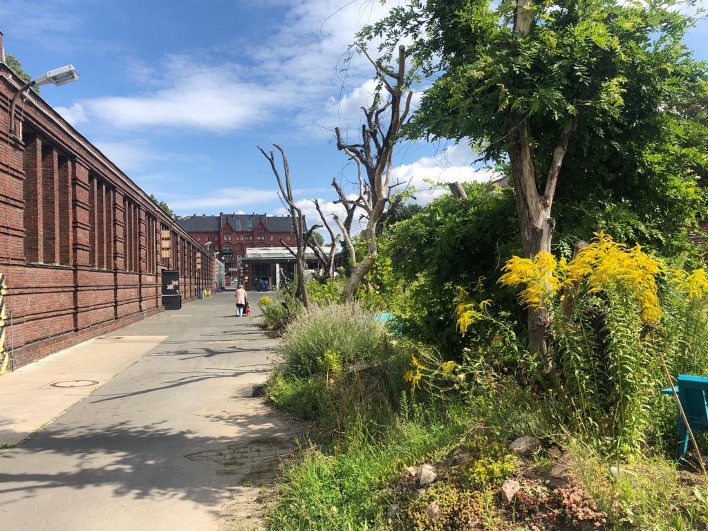Begrünter Hof eines Industriegebäudes