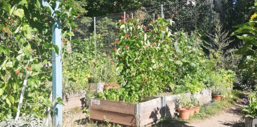 Beete - und Grün wie im Garten Eden