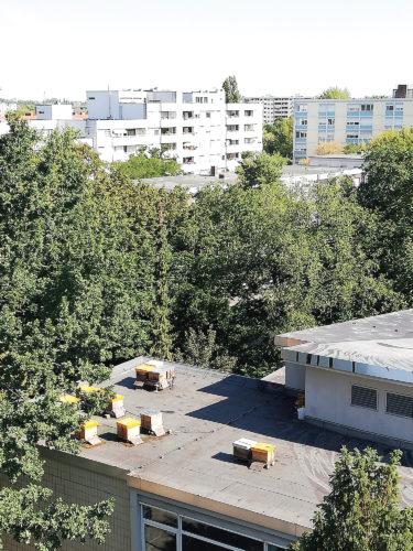 Bienenstöcke auf dem Dach des Centre Francais