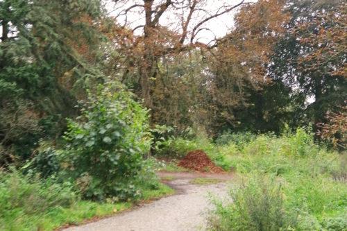 Zu sehen ist ein Laubhaufen, der unter einem Großen Kastanienbaum zusammengekehrt wurde.