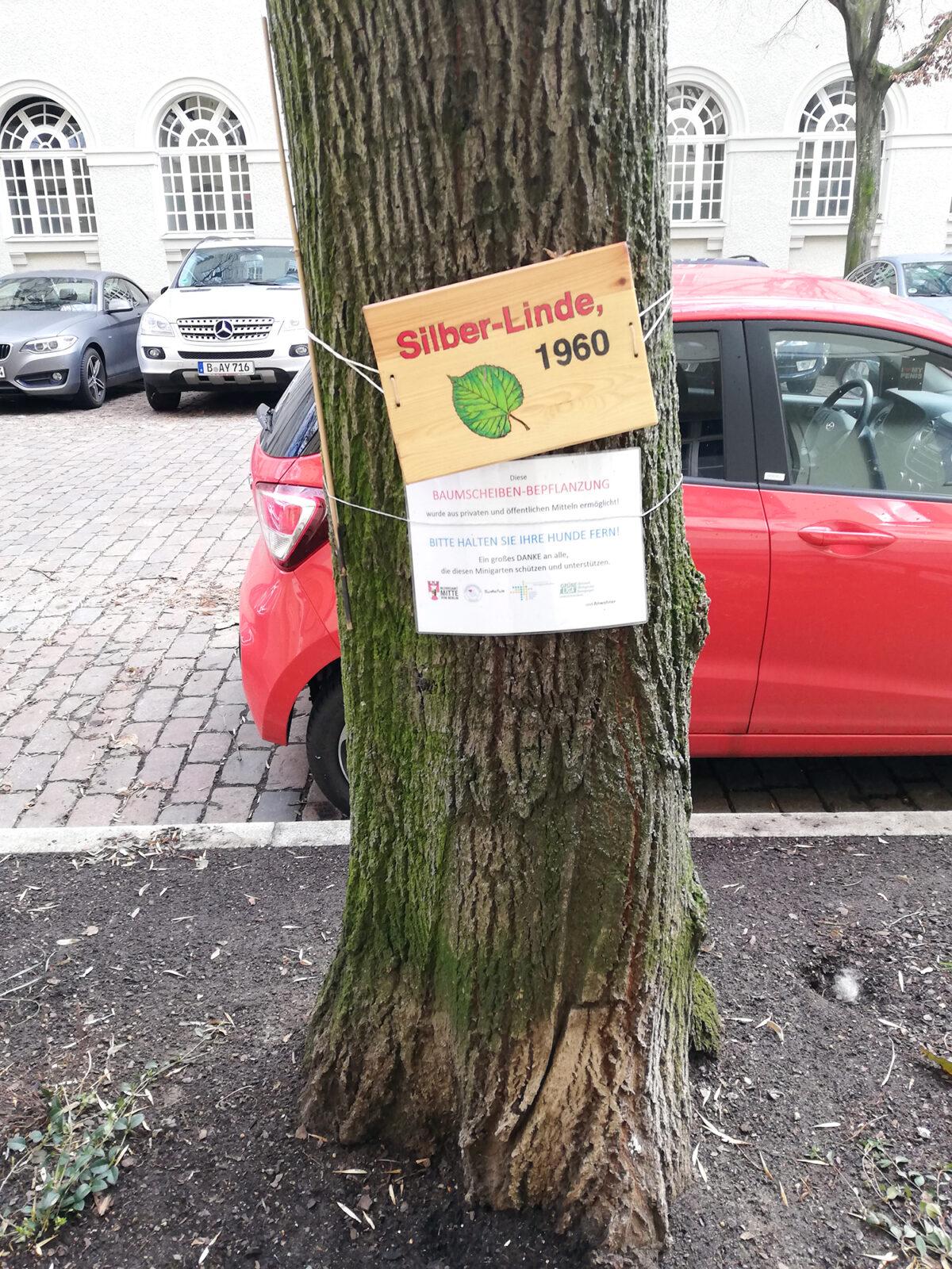 Baum in der Türkenstraße