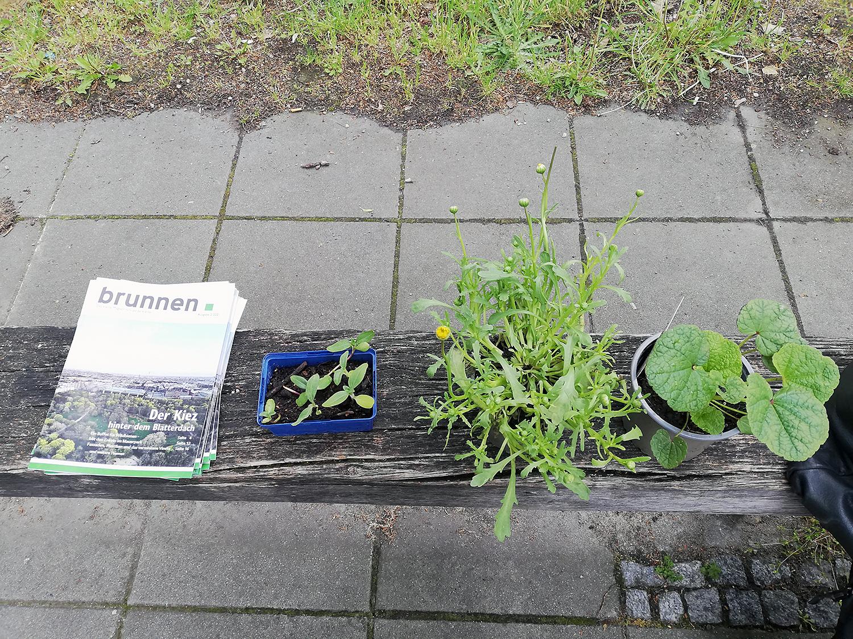 Hochbeetgarten Diesterbeet in der Swinemünder Straße. Foto: Hensel